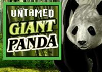 Giant panda ( Панда) - бесплатный игровой автомат